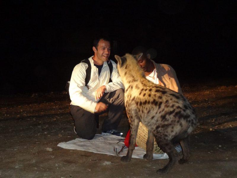 Hyenas-feeding-Harar