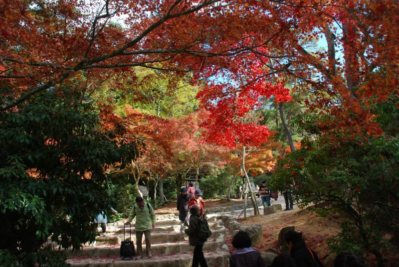 Japan-autumn-leaves-happiness
