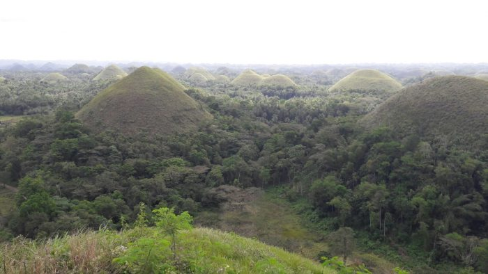 Bohol-rice-terraces