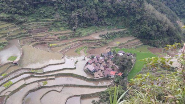 rice-village