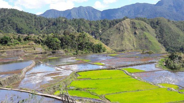 Kalinga-Rice-terraces