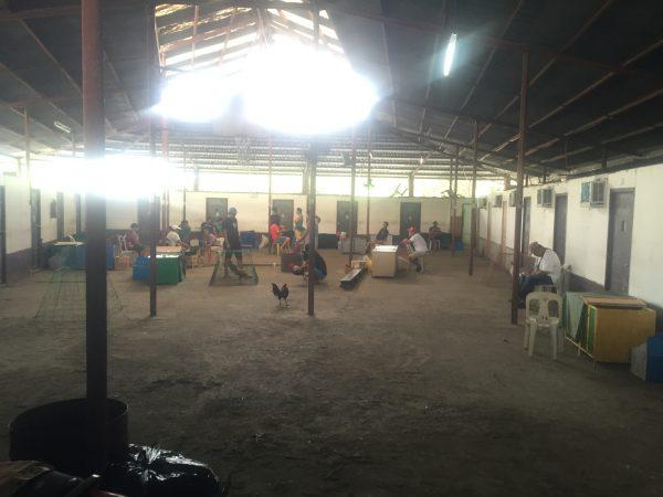 cock-fight-training-area-manila