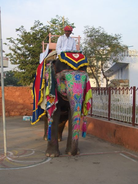 colored_elephant