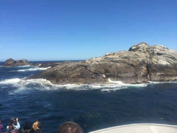 Doubtful_Sound_seals