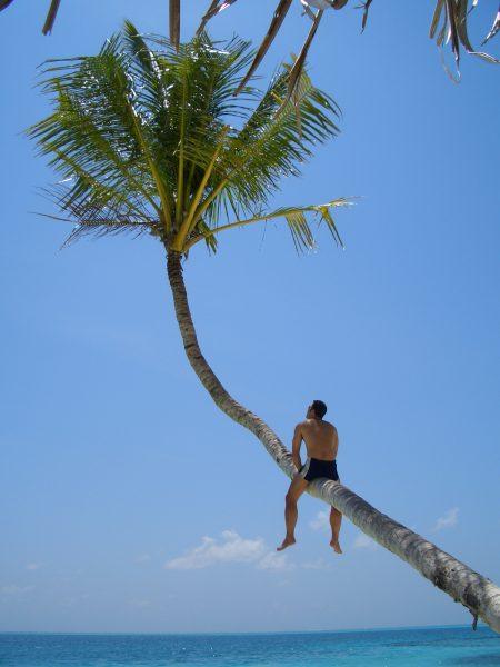 maldives_tree