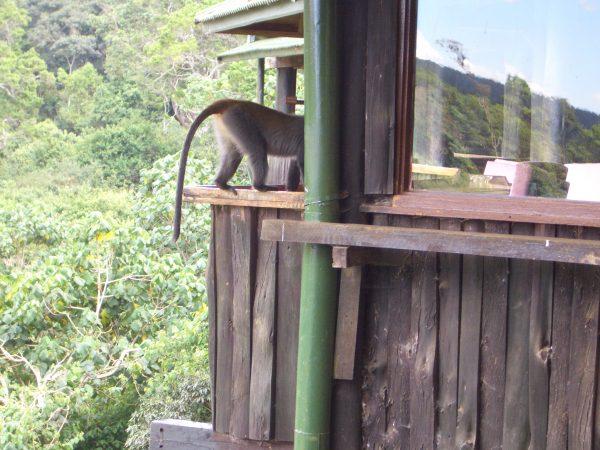 monkey_room_Kenya