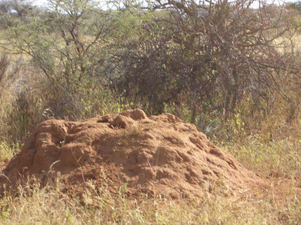termites_Kenya