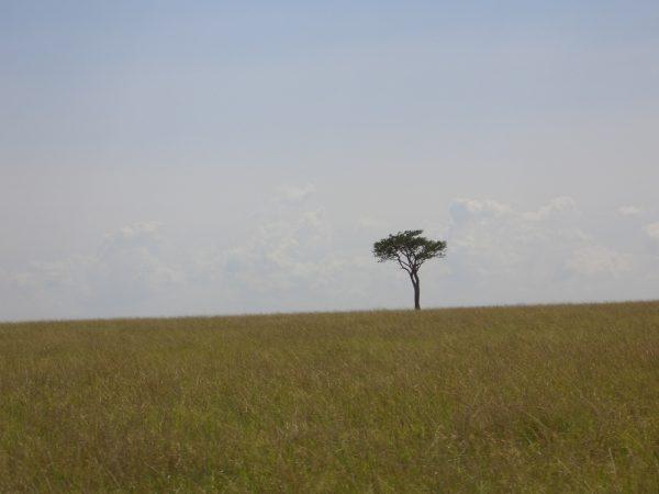 lone_tree_Kenya