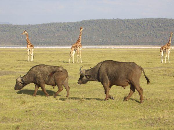 all_animals_Kenya