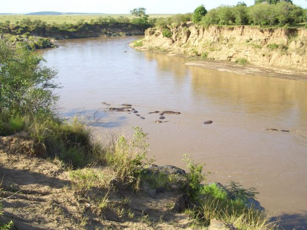 Hippos_river