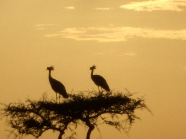 Birds_Kenya