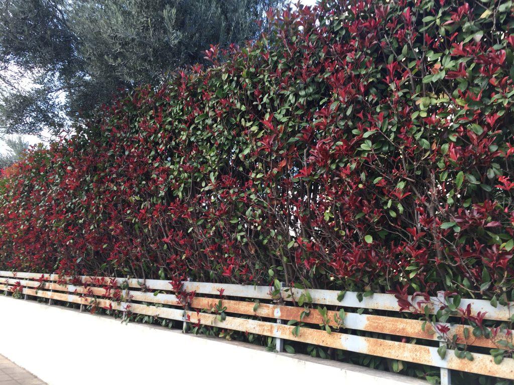 τοίχος λουλουδιών